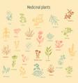 set of hand drawn medicinal herbs vector image