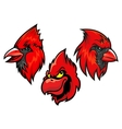 Cardinal bird heads set vector image