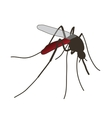 mosquito a realistic mosquito vector image
