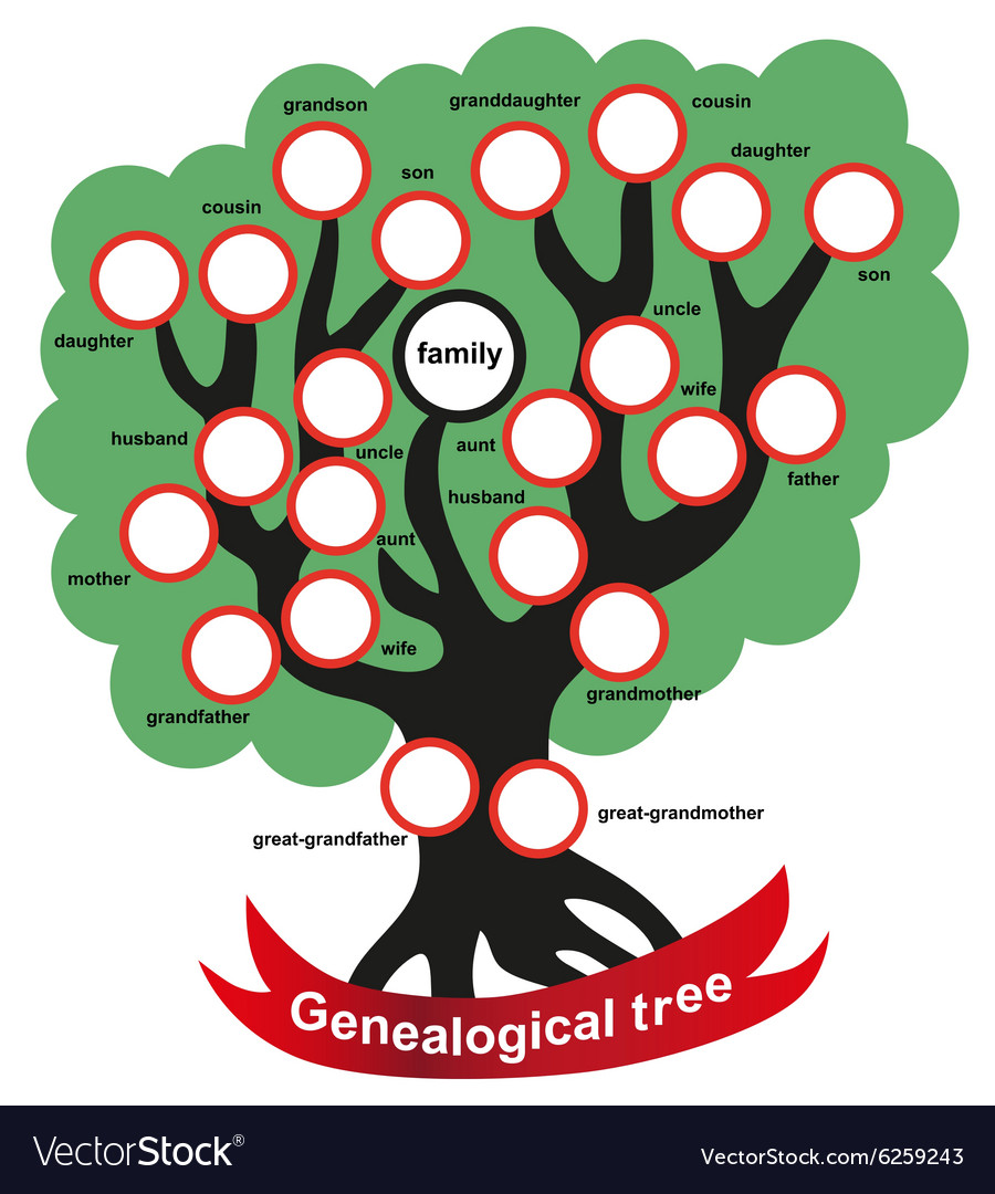 Genealogical tree vector
