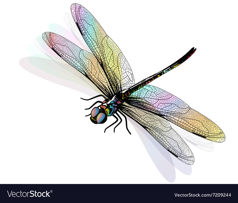 Dragonfly isolated and colorful eps10 vector