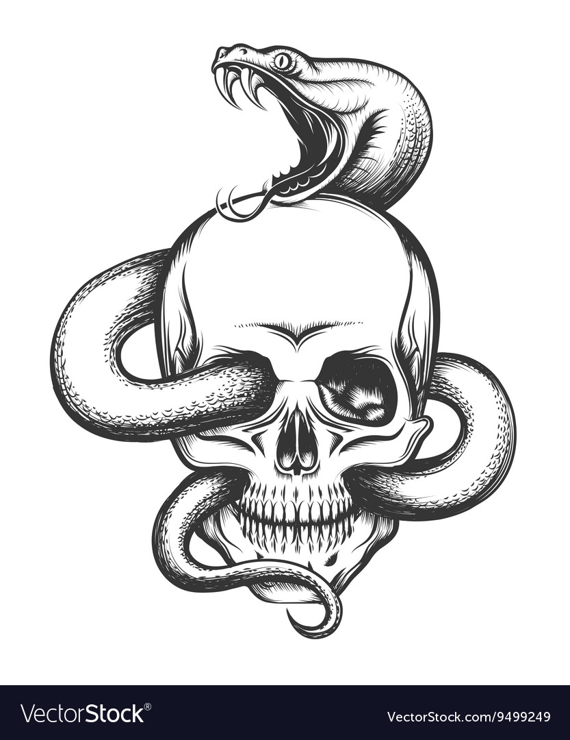 Snake and skull engraving vector