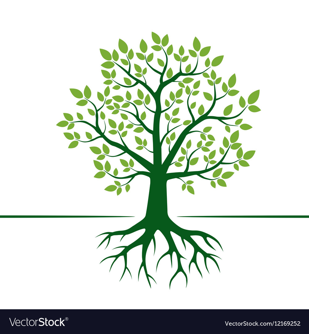 Green tree and roots vector