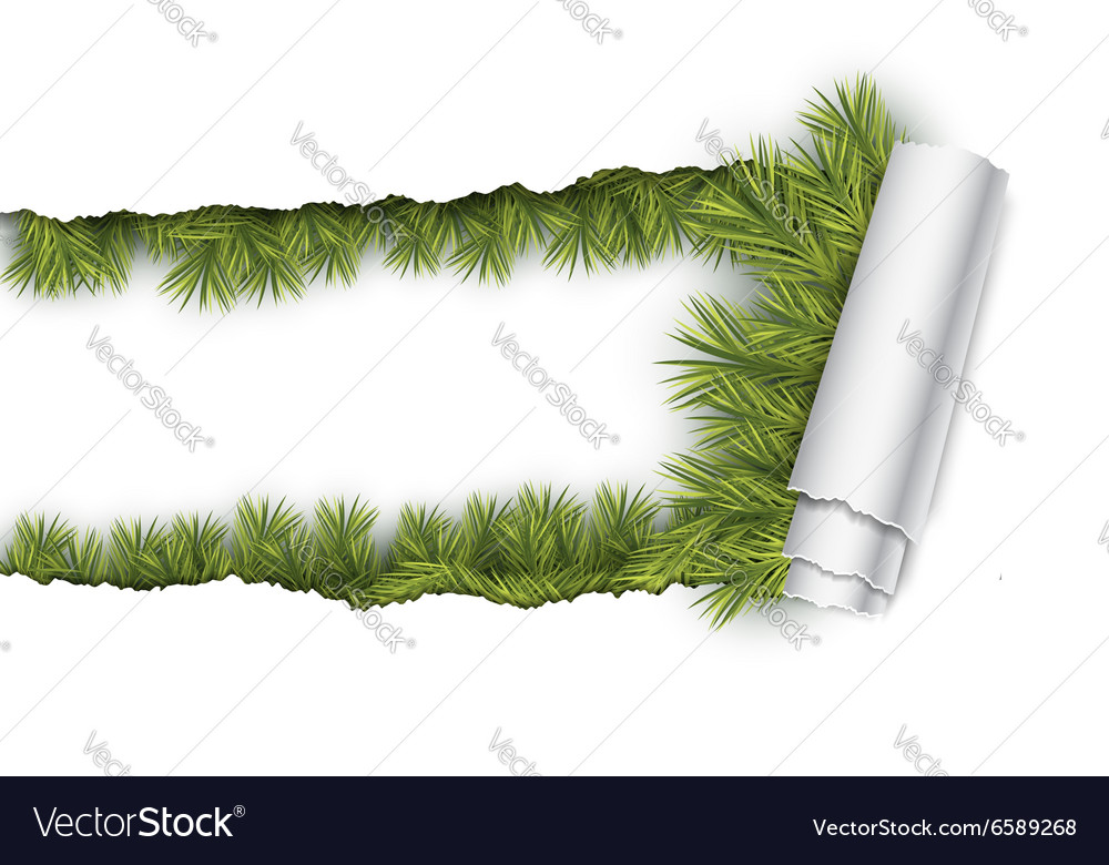 Ripped paper and fir branches vector