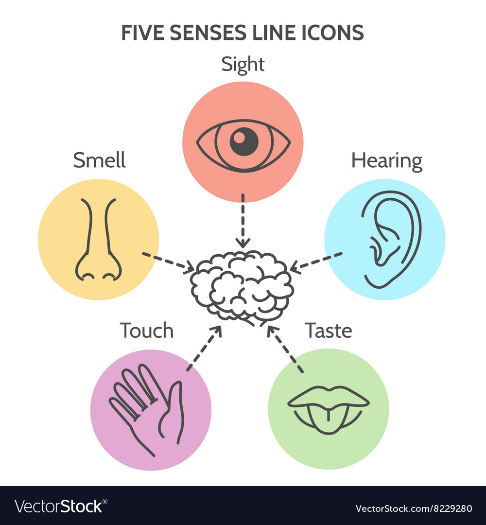 Five senses line icons vector