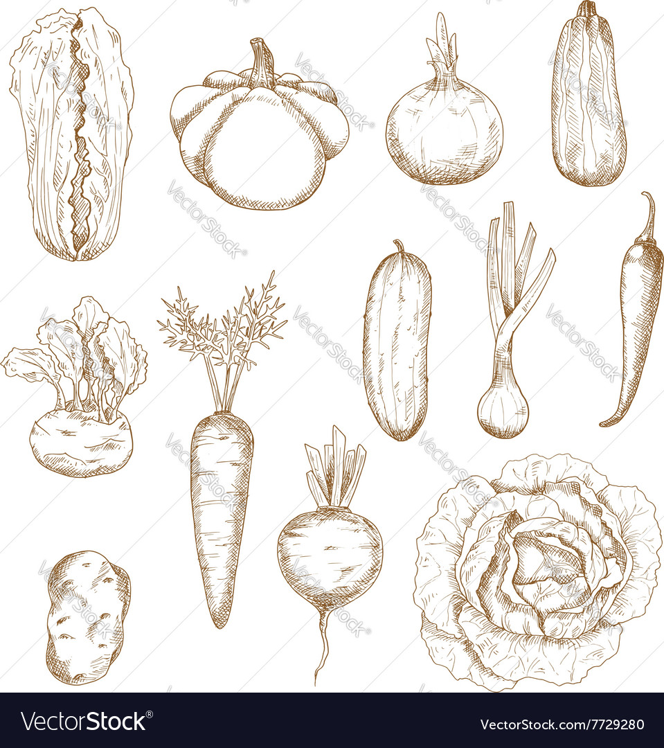Healthy vegetables isolated sketches set vector