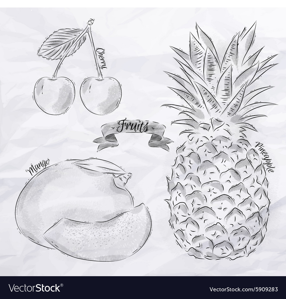 Fruit cherry mango pineapple vintage vector