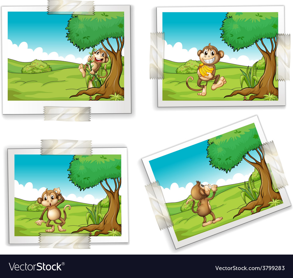Photographs and monkeys vector