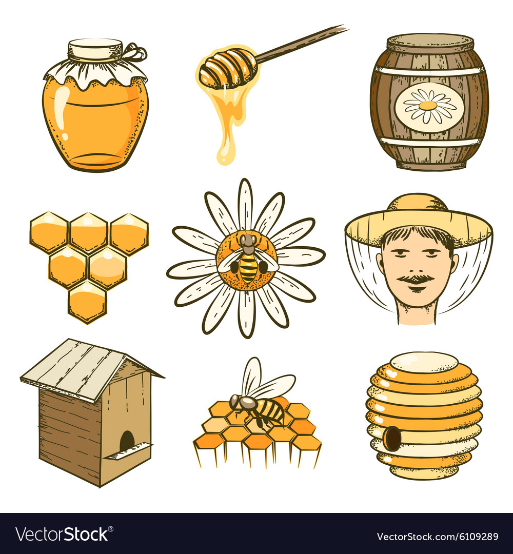 Hand drawn beekeeping honey and bee icons vector