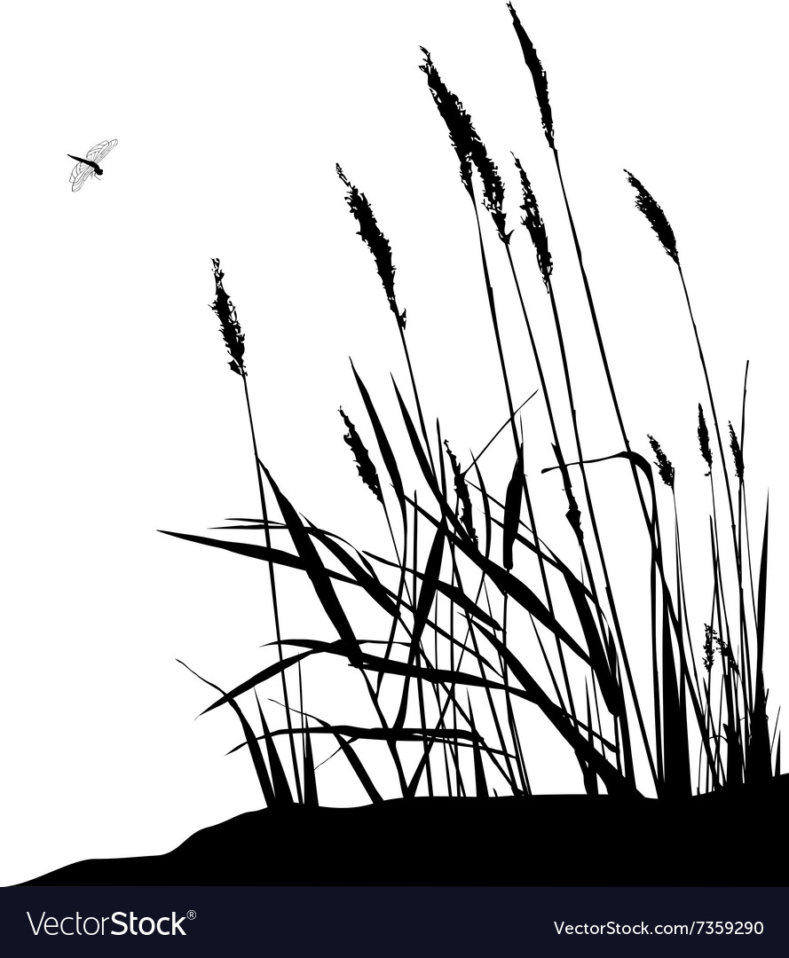 Reeds and dragonfly vector