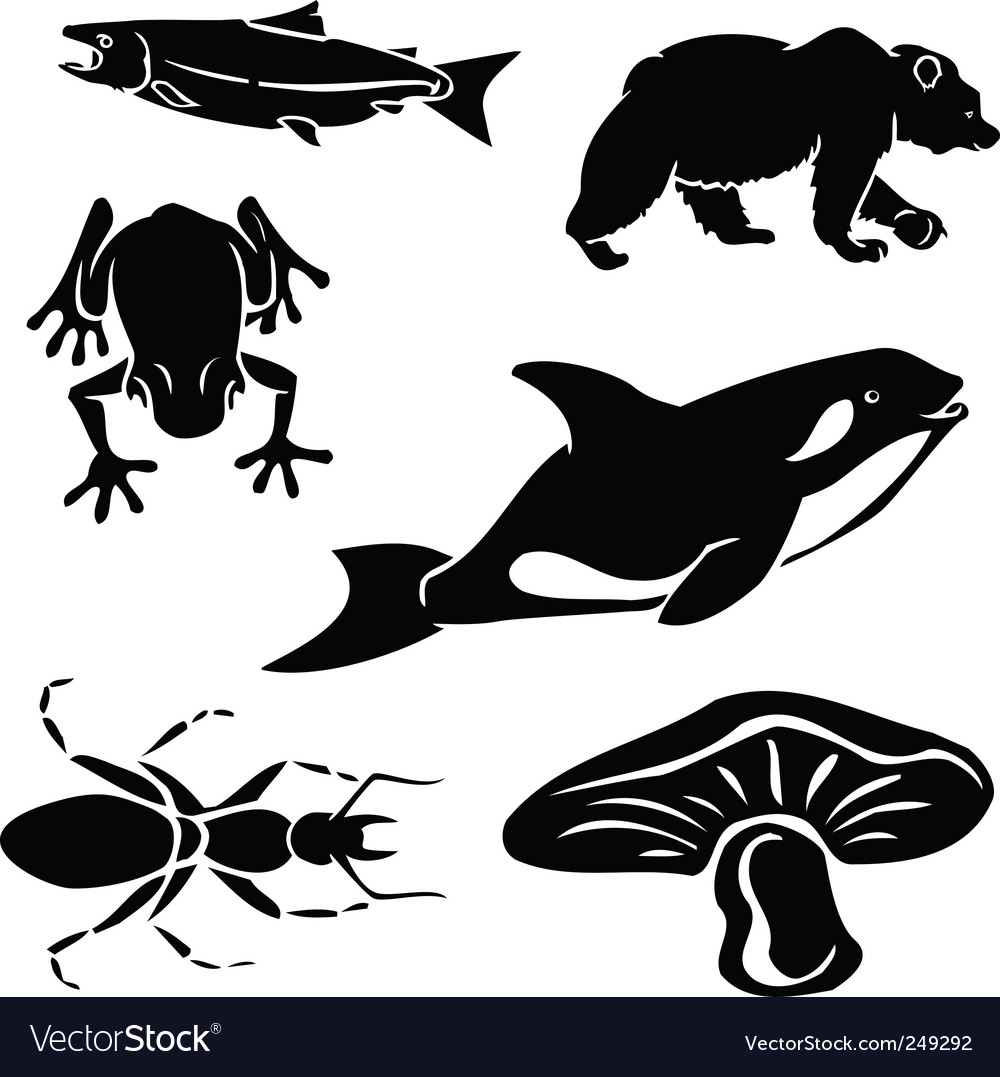 West coast wildlife vector
