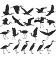 Bird - herons vector image