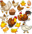 Chicken and fresh eggs vector image