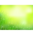morning sunlight grass vector image vector image