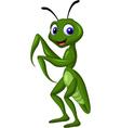 Praying mantis grasshopper vector image