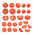 tomatoes collection isolated vector image