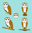 set of barn owl on branch in flat style vector image