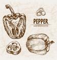 digital detailed line art pepper vegetable vector image