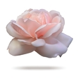 Pink rosebud isolated on white background front vector image