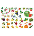 berries fruits and vegetables large collection vector image