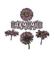 chamomile floral set vector image