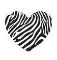 Heart shape painted in the coloring Zebra vector image