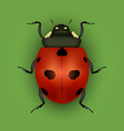realistic detailed insect ladybug on a green vector image