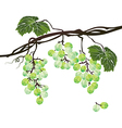 Stylized polygonal branch of green grapes vector image