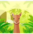 Vicuna on the Jungle Background vector image