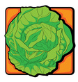 cabbage clip art vector image