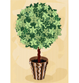 Topiary Tree in decorative flowerpot vector image