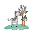 zebra cartoon in forest next to the trees in vector image