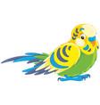 budgerigar vector image