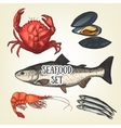 Creative seafood graphic sketch prawn vector image