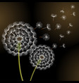 black background with spring dandelion blowing vector image
