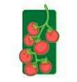 cherry tomato clip art vector image