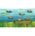 A group of turtles in the river vector image