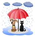Dog and cat under umbrella vector image