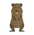 Cute standing brown hamster cartoon flat vector image