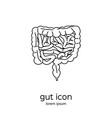gut human digestive system vector image