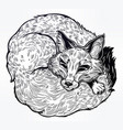 wild sleeping fox line art vector image