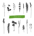 Summer herbs silhouettes vector image