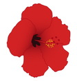 Red hibiscus isolated on white background vector image vector image