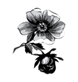 Branch with flowers roses isolated Vintage grunge vector image