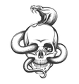 Snake and Skull Engraving vector image