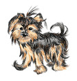 Yorkshire terrier puppy vector image