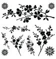 Flower ornaments vector image