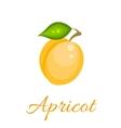 Orange apricot icon vector image