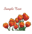 red tulips vector image vector image