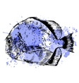 Sketch of hand drawn fish vector image